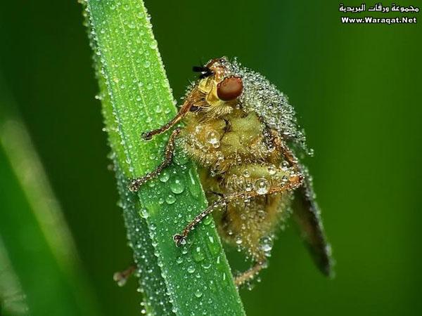 اضغط على الصورة لعرض أكبر  الاســـم:Drops-Insects8[1].jpg المشاهدات:136 الحجـــم:70.1 كيلوبايت الرقم:63307