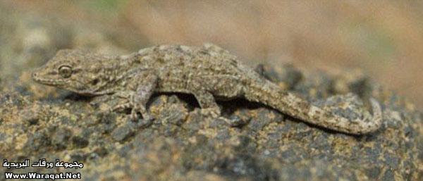 اضغط على الصورة لعرض أكبر  الاســـم:Insect-chameleon5[1].jpg المشاهدات:664 الحجـــم:48.5 كيلوبايت الرقم:63312