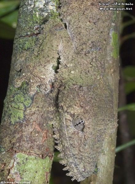 ���� ��� ������ ���� ����  ��������:Insect-chameleon6[1].jpg ���������:180 ��������:59.8 �������� �����:63313