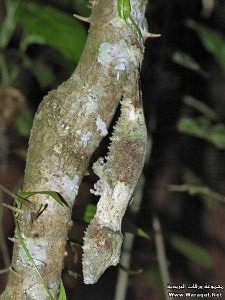 اضغط على الصورة لعرض أكبر  الاســـم:Insect-chameleon10[1].jpg المشاهدات:197 الحجـــم:74.9 كيلوبايت الرقم:63317