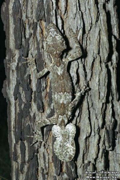 اضغط على الصورة لعرض أكبر  الاســـم:Insect-chameleon11[1].jpg المشاهدات:265 الحجـــم:53.5 كيلوبايت الرقم:63318