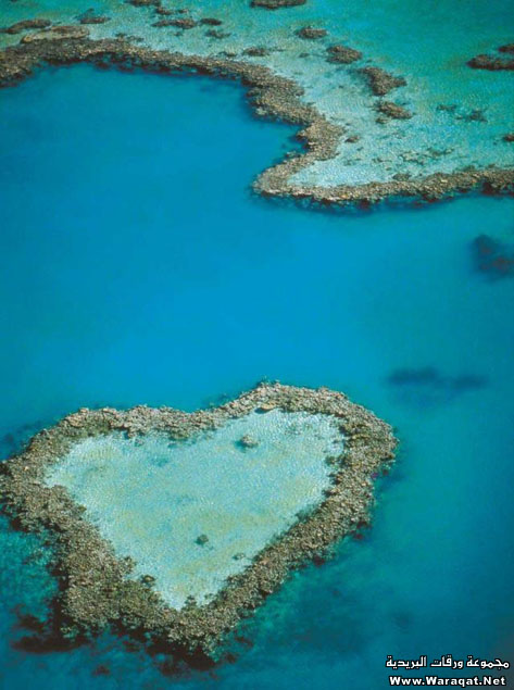 اضغط على الصورة لعرض أكبر  الاســـم:Pretty-hearts21[1].jpg المشاهدات:192 الحجـــم:79.7 كيلوبايت الرقم:65154